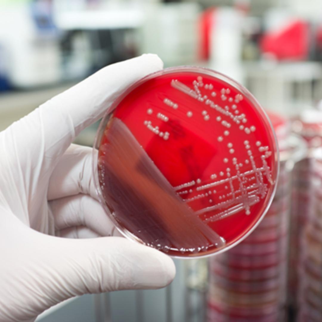 Dortek Antibacterial MRSA Study IMSL Certification